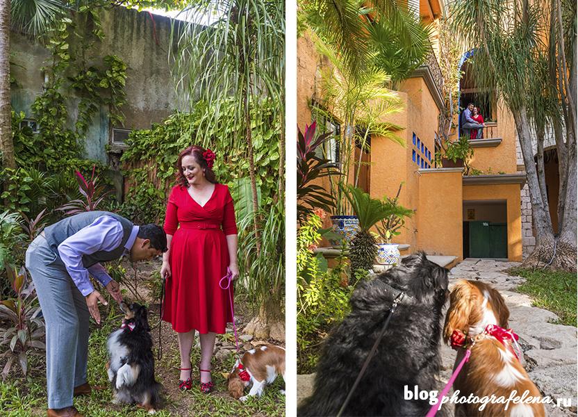 фотосессия с собакой на улице