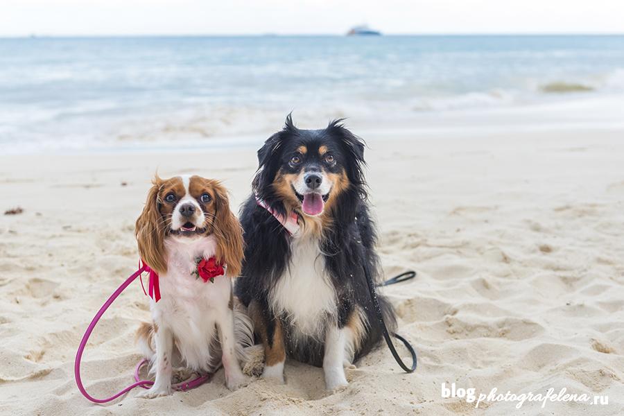 фотосессия собак на пляже